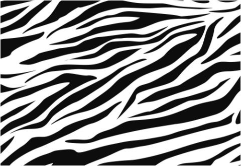 Zebra Stripes Car Decal 26 Quot W X 18 Quot H Designed By Custom